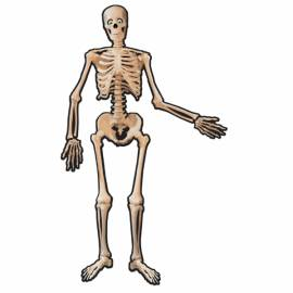 Skeleton Jointed Cutout
